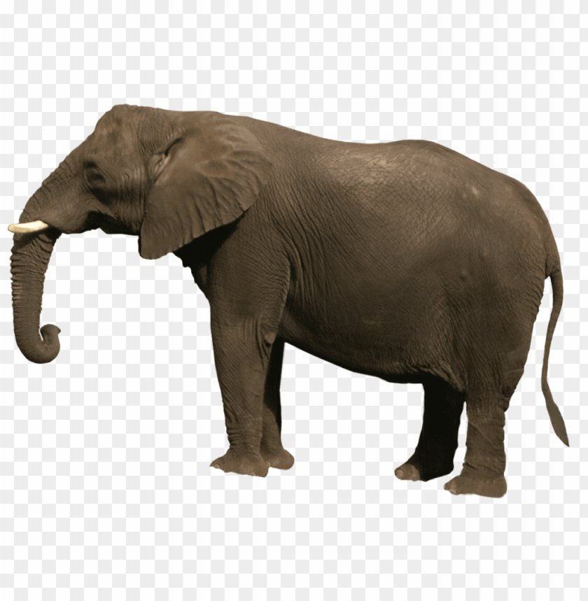 free PNG s of animals PNG image with transparent background PNG images transparent