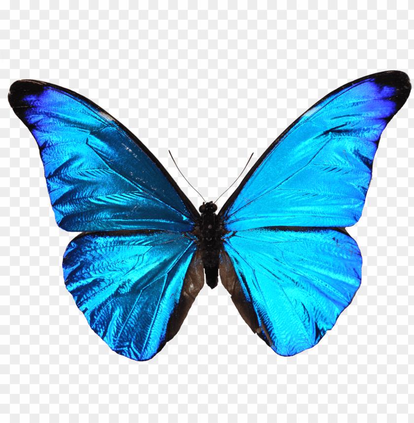 free PNG sapitos design blue butterfly mariposa azul - leyenda de la mariposa azul PNG image with transparent background PNG images transparent