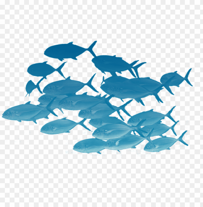 School Of Fishes Png School Of Fish Transparent Png Image With Transparent Background Toppng
