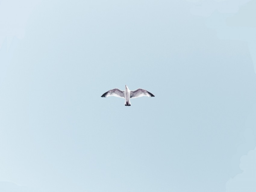 free PNG seagull, bird, flight, sky, wings, flap background PNG images transparent