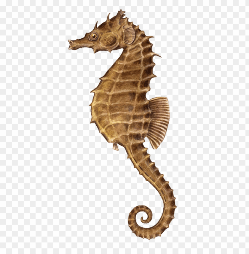 free PNG Download seahorse illustration png images background PNG images transparent