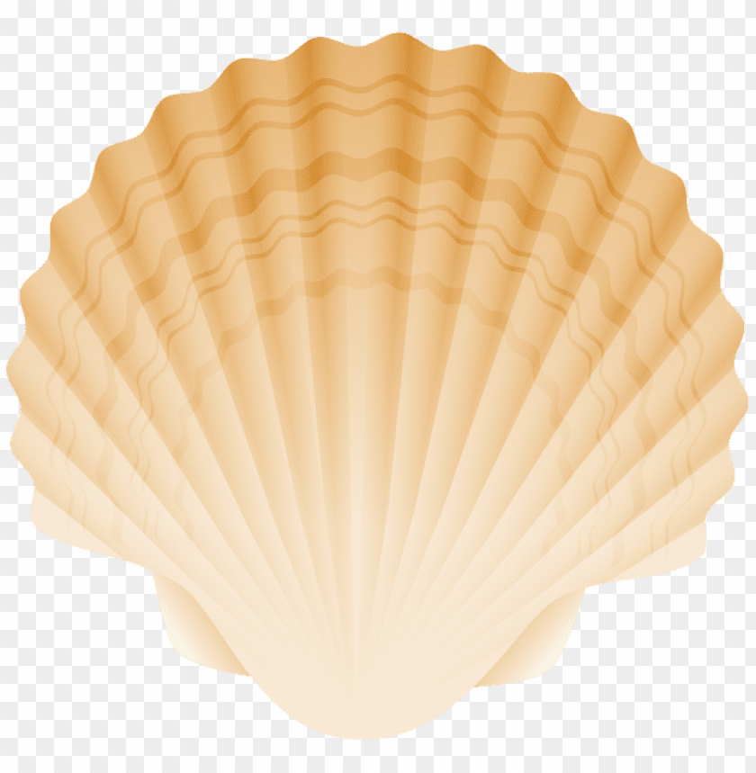 free PNG Download seashell clipart png photo   PNG images transparent