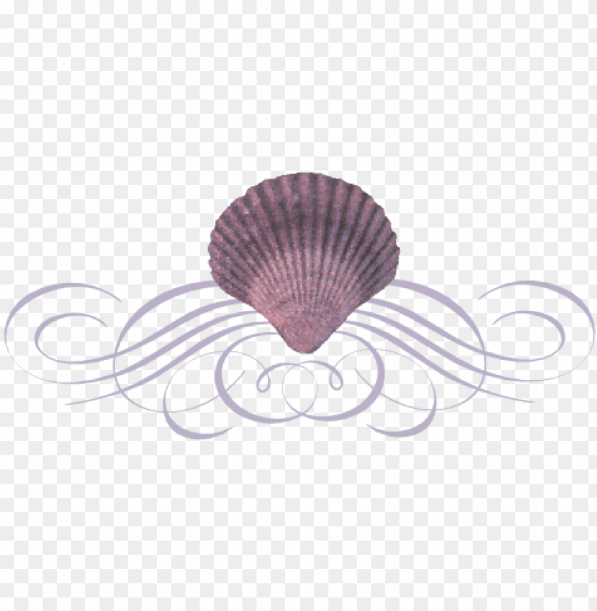 free PNG seashell flourish - seashell divider PNG image with transparent background PNG images transparent