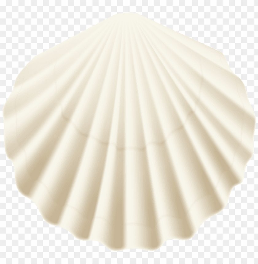 free PNG Download seashell white transparent clipart png photo   PNG images transparent