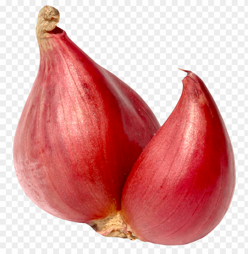 free PNG Download shallot onion png images background PNG images transparent