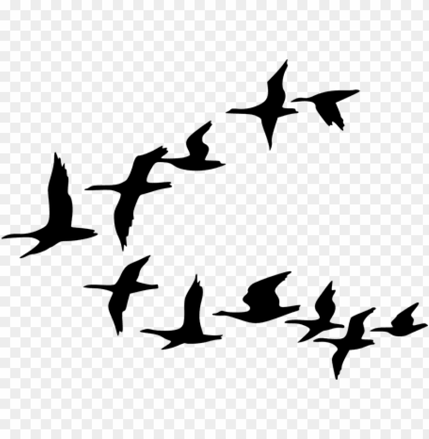free PNG silhouette birds black flying geese waterf - flock of birds clipart PNG image with transparent background PNG images transparent