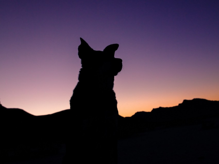 free PNG silhouette, dog, night, sky background PNG images transparent