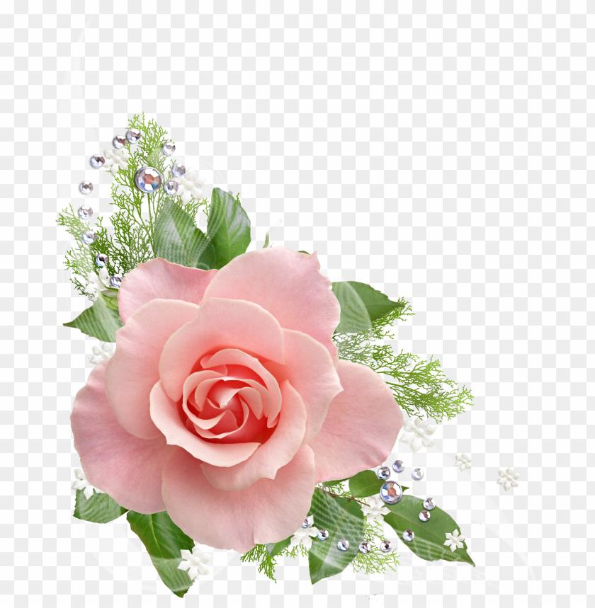 Single Pink Rose Png Pink Roses Transparent Background Png Image With Transparent Background Toppng