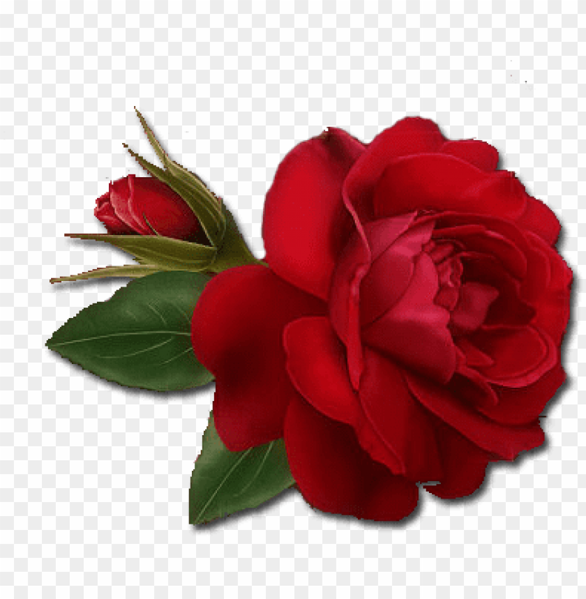 free PNG single red rose png clipart - single red rose PNG image with transparent background PNG images transparent