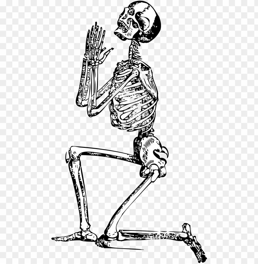 free PNG skeleton-33847 - skeleton clip art PNG image with transparent background PNG images transparent