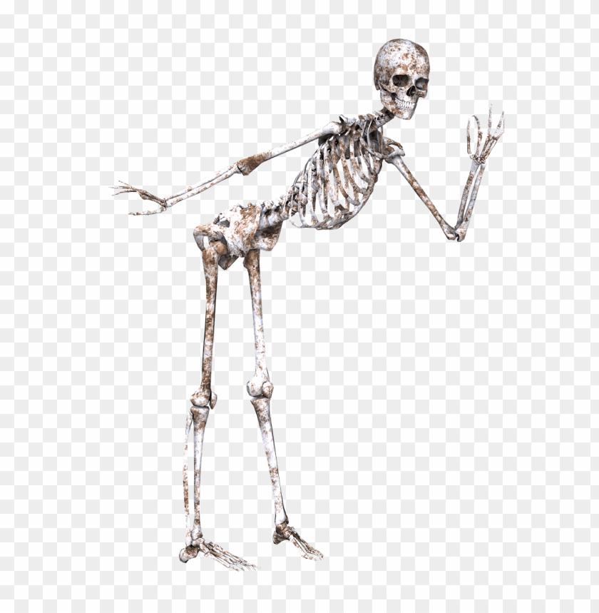 free PNG Download skeleton posing png images background PNG images transparent