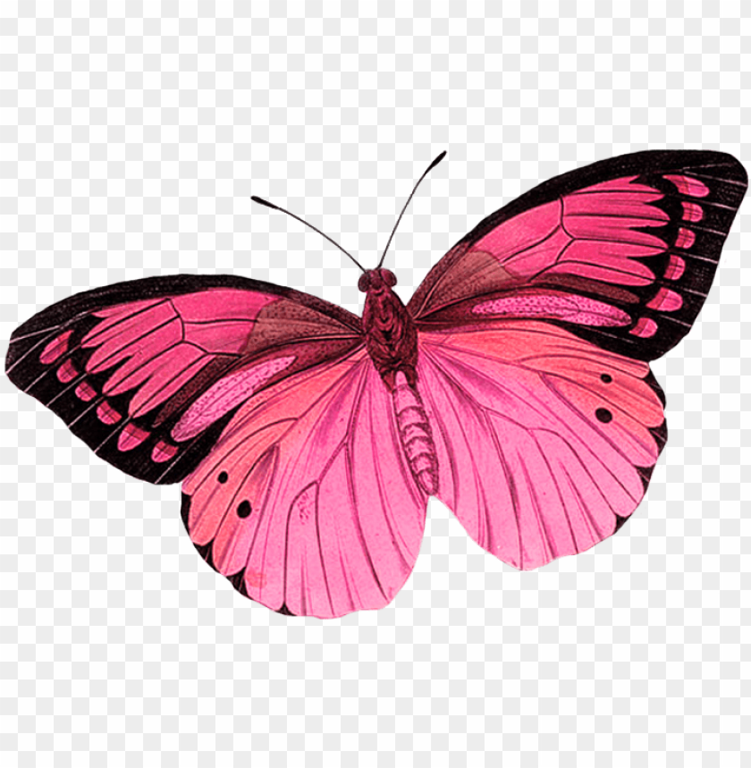 free PNG سكرابز بدون تحميل scraps butterfly clip art, butterfly - pink butterfly transparent background PNG image with transparent background PNG images transparent