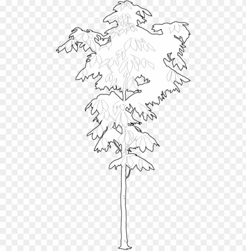 free PNG small chestnut tree 2d trees - black maple PNG image with transparent background PNG images transparent