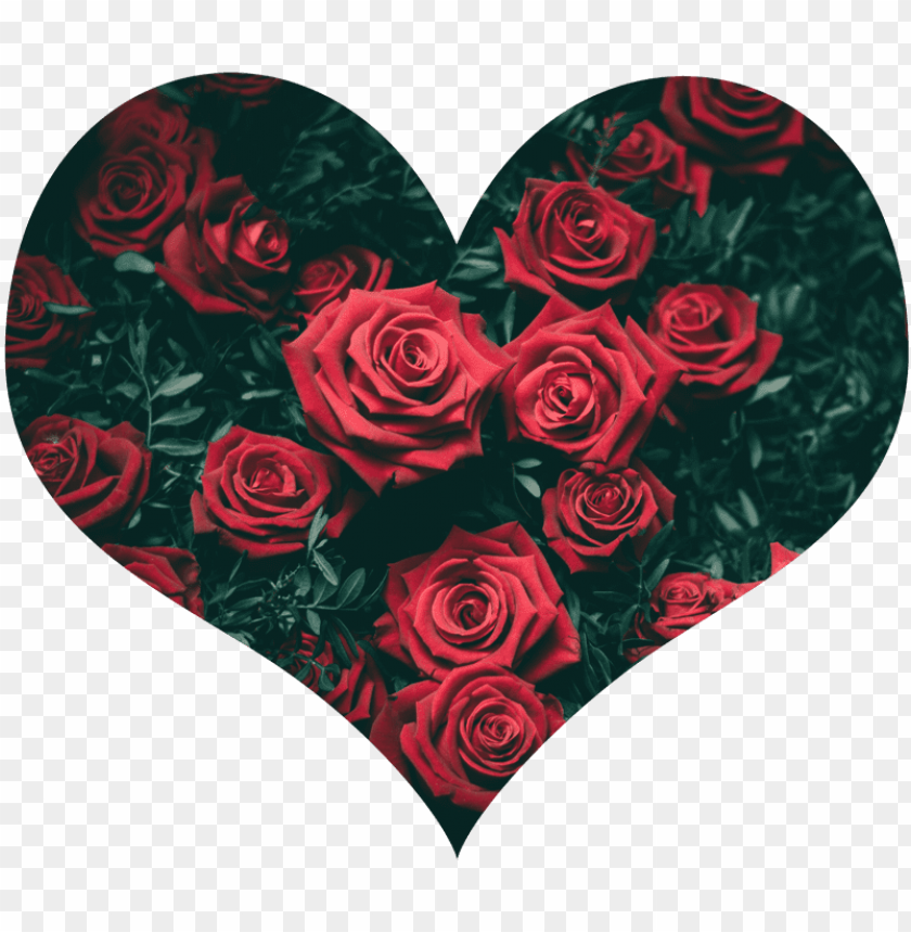 free PNG small heart 800×800 - beautiful images for whatsa PNG image with transparent background PNG images transparent