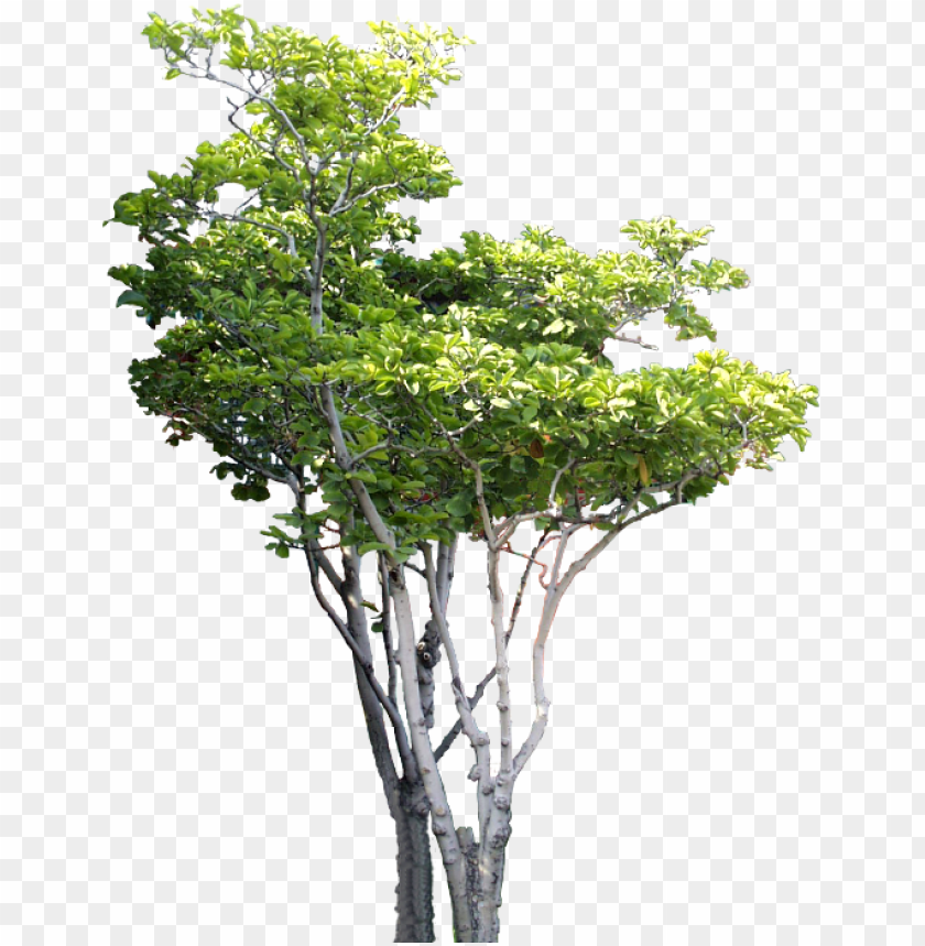 small tree tree psd, b tree, tree photoshop, tree cut - arboles png para renders PNG image with transparent background@toppng.com