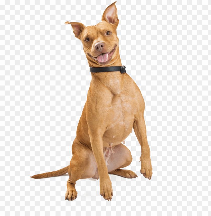 free PNG smiling dog PNG image with transparent background PNG images transparent