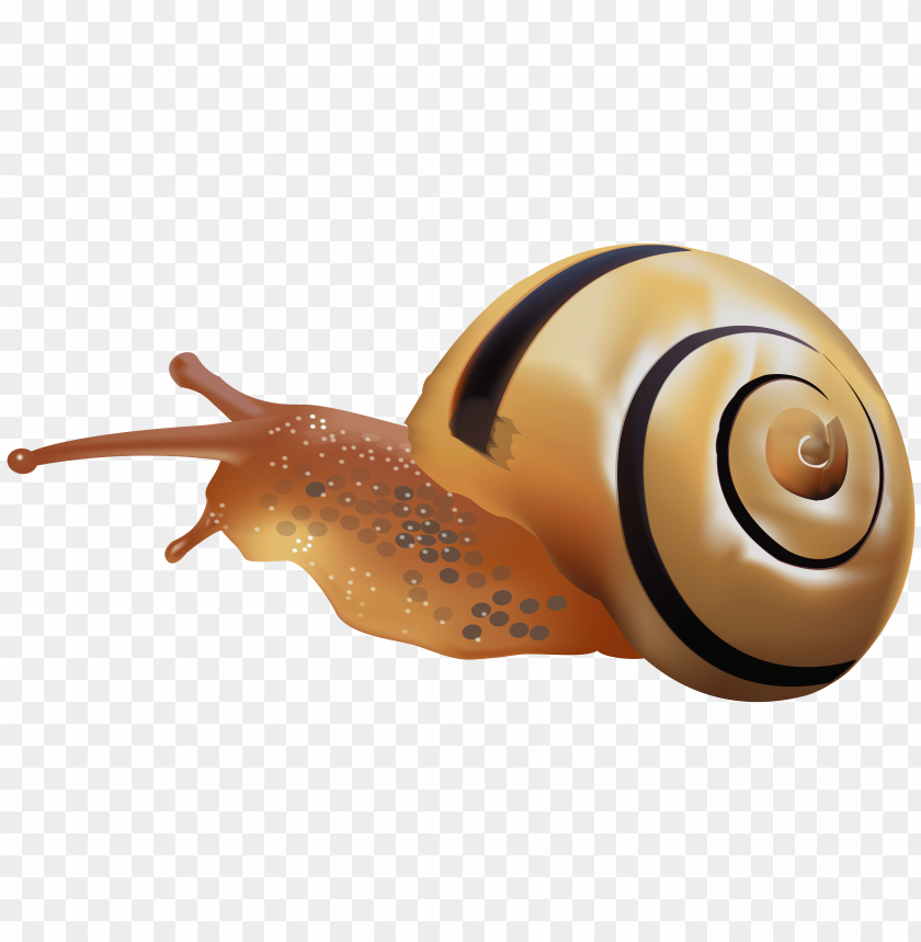 free PNG Download snail clipart png photo   PNG images transparent