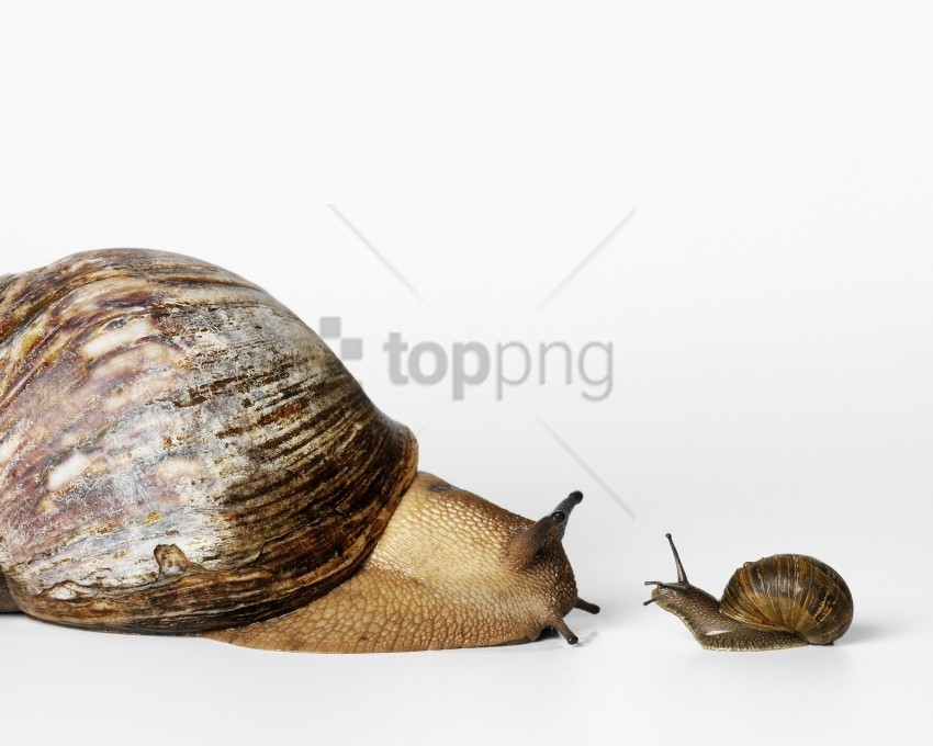 free PNG snails, view, white background wallpaper background best stock photos PNG images transparent