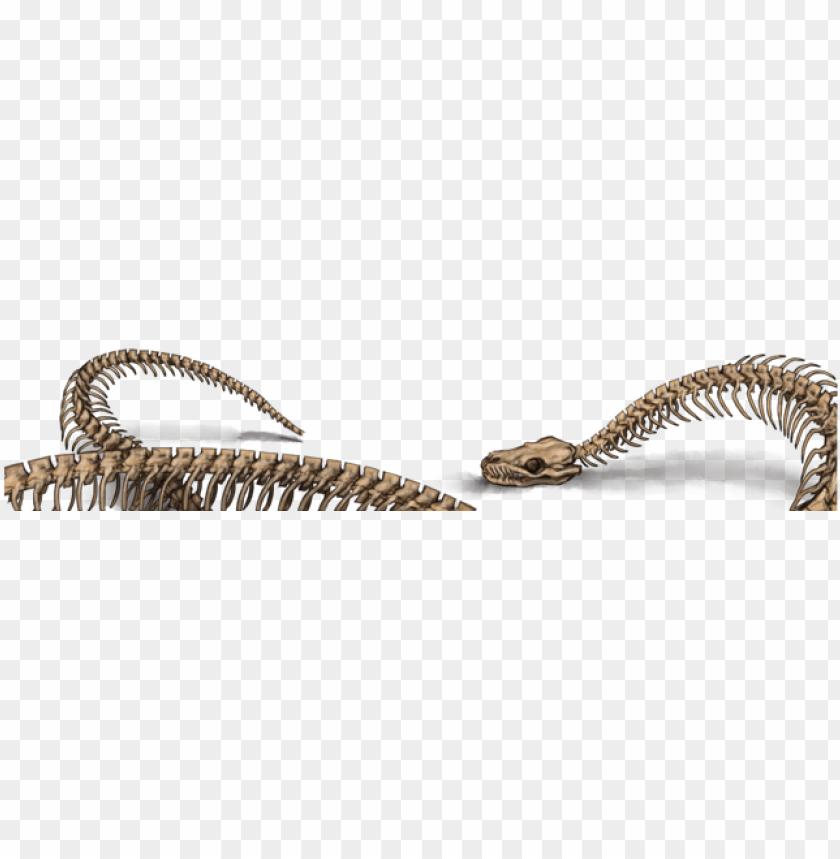 free PNG snake skeleton PNG image with transparent background PNG images transparent
