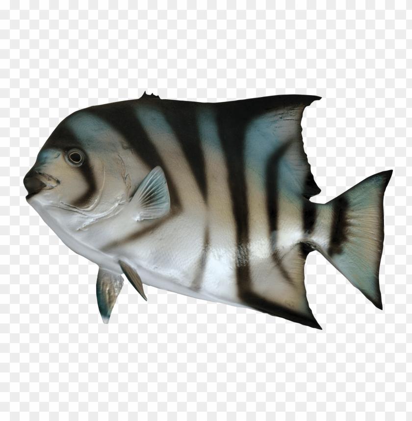free PNG Download Spade Fish png images background PNG images transparent