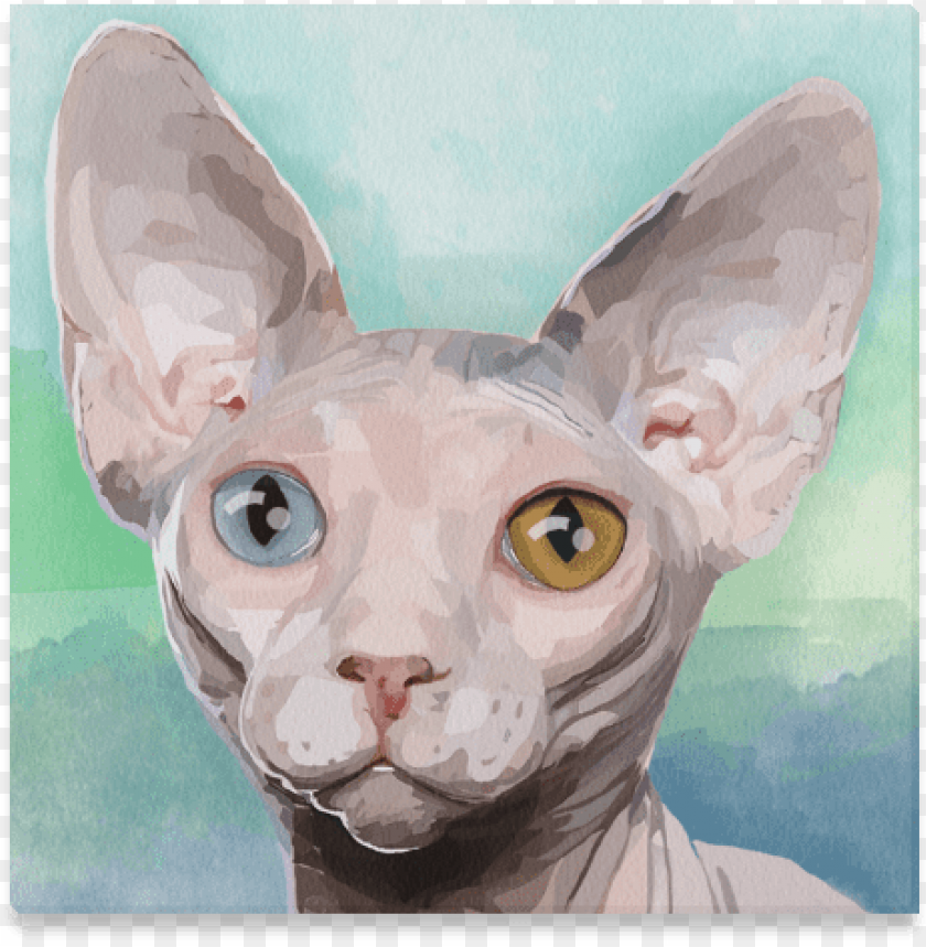 free PNG sphynx cat PNG image with transparent background PNG images transparent