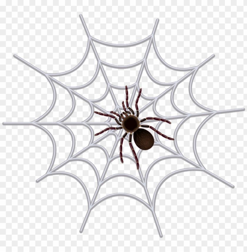 free PNG Download spider web transparent png images background PNG images transparent