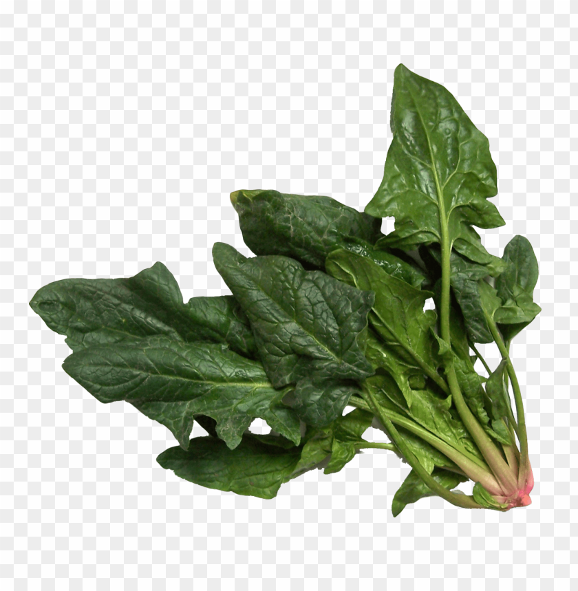 free PNG Download spinach png images background PNG images transparent