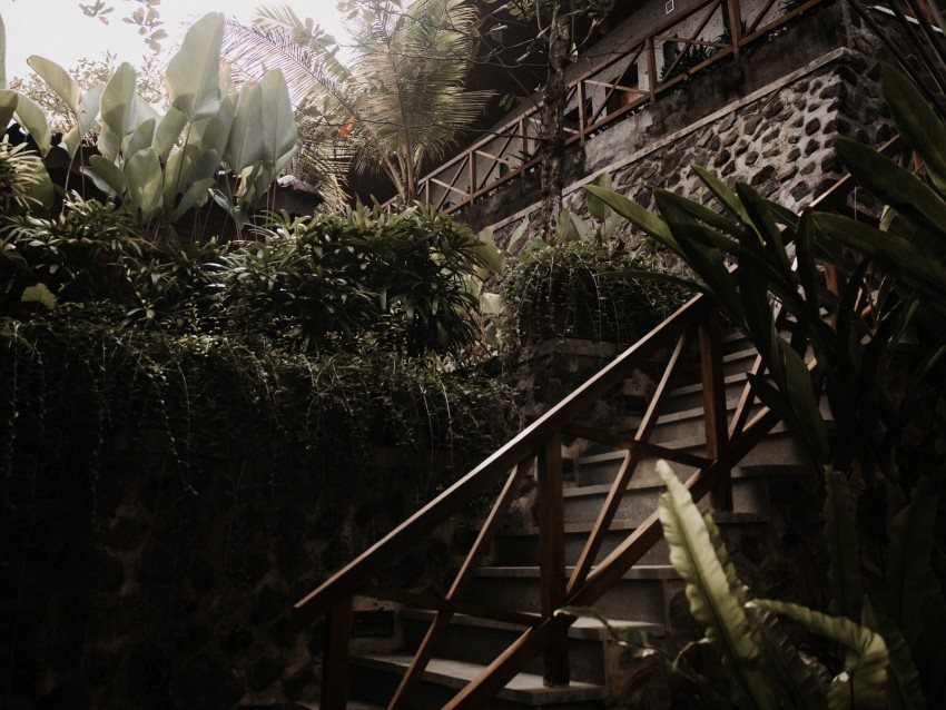 free PNG stairs, plants, tropical, decorative, building background PNG images transparent