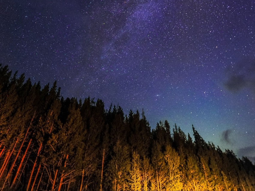 free PNG starry sky, trees, diagonally, night, stars, sky background PNG images transparent