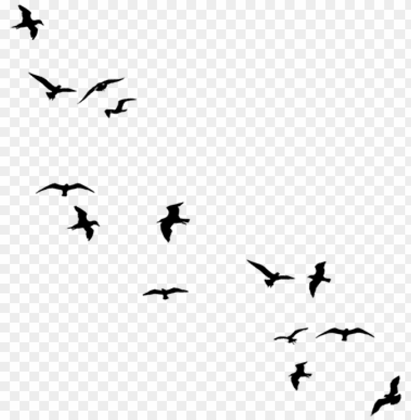 free PNG stock black flying birds by jassy2012 on deviantart - flying away birds silhouette PNG image with transparent background PNG images transparent