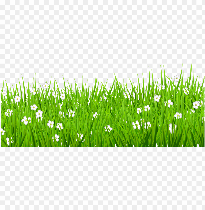 free PNG stock grass background clipart - grass with flowers transparent PNG image with transparent background PNG images transparent