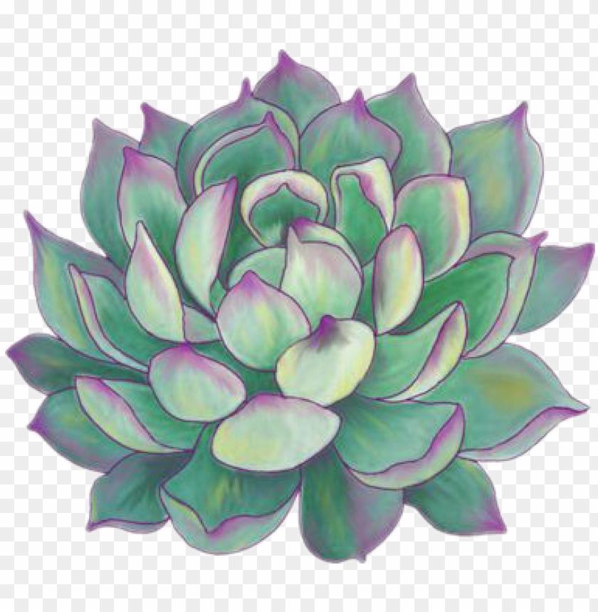 Succulent Plants Aesthetic Tumblr Sticker Succulent Plant