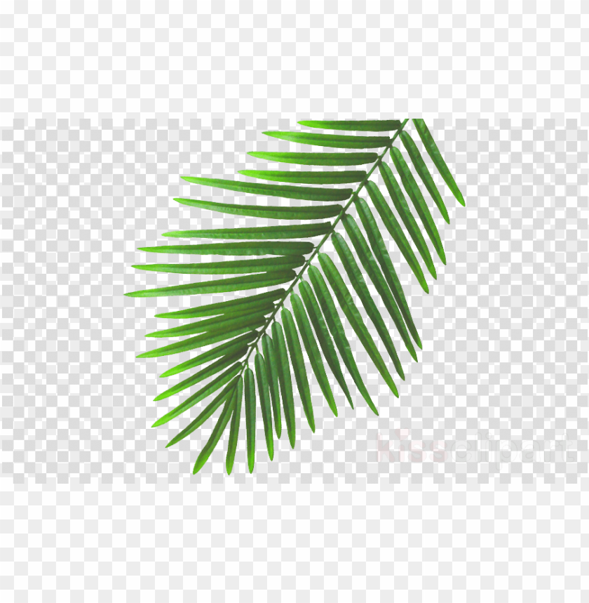 free PNG summer leaves png clipart leaf clip art - beach leaves PNG image with transparent background PNG images transparent