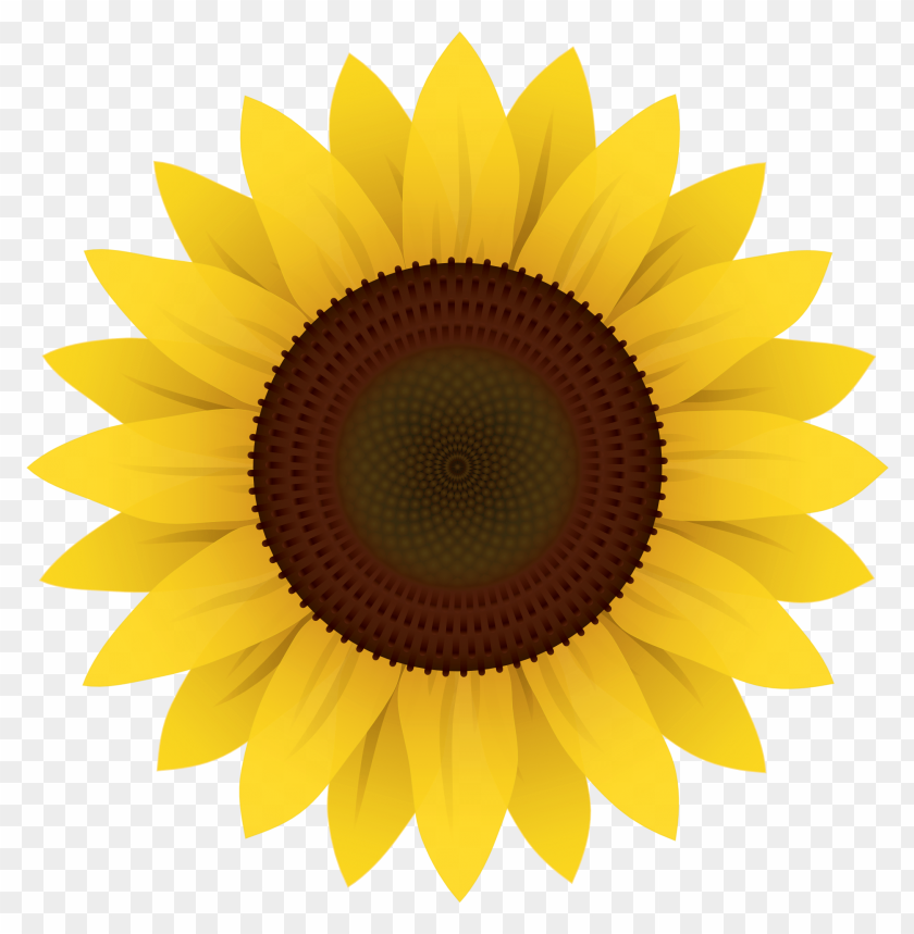 free PNG Sunflower Vector png - Free PNG Images PNG images transparent