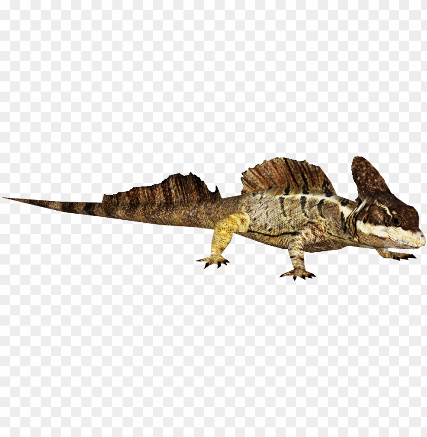 free PNG svg free library common zt download library wiki fandom - basilisk lizard transparent PNG image with transparent background PNG images transparent