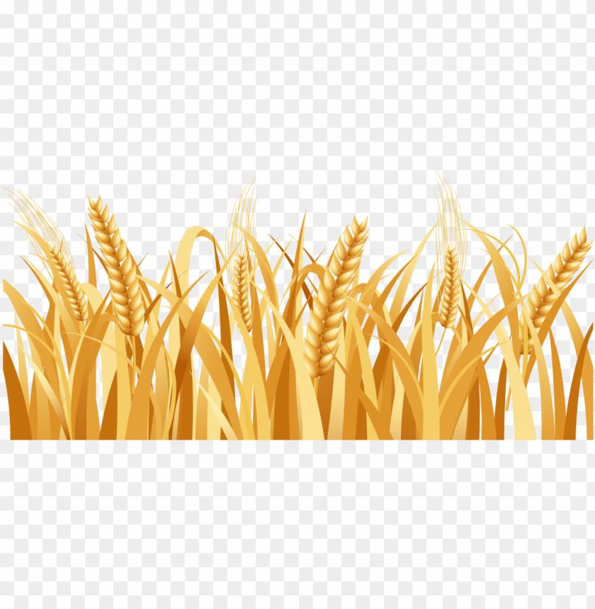 Wheat Head SVG Vector, Wheat Head Clip art - SVG Clipart