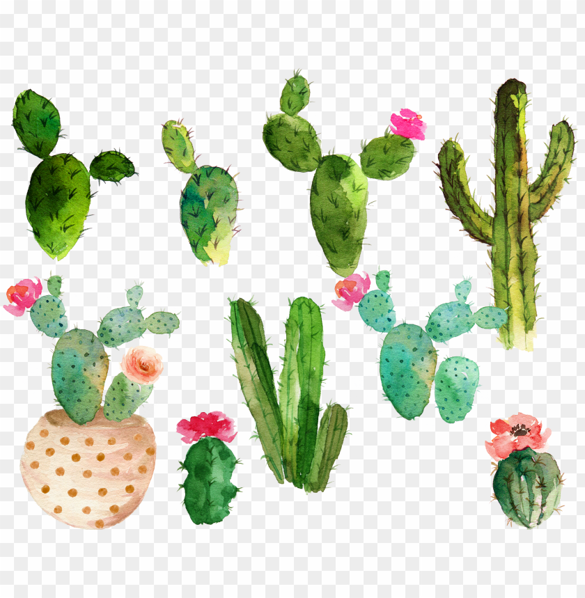 free PNG svg royalty free library cactaceae watercolor painting - cactus with flowers watercolor PNG image with transparent background PNG images transparent