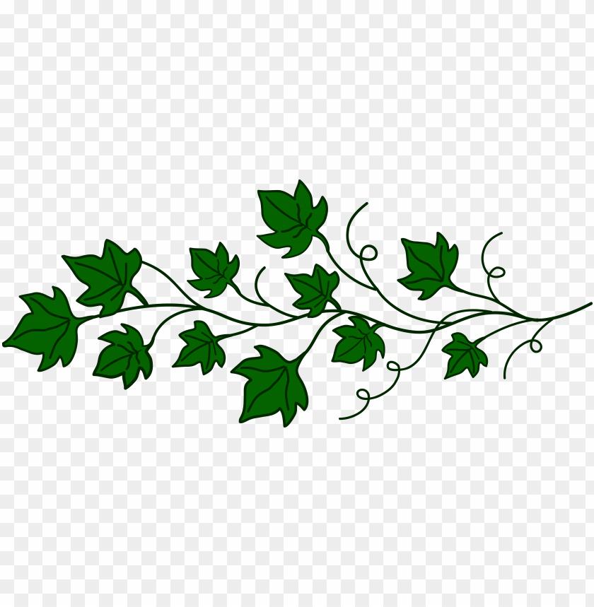 svg transparent download clipart vines - clip art vine png image with  transparent background | toppng  toppng