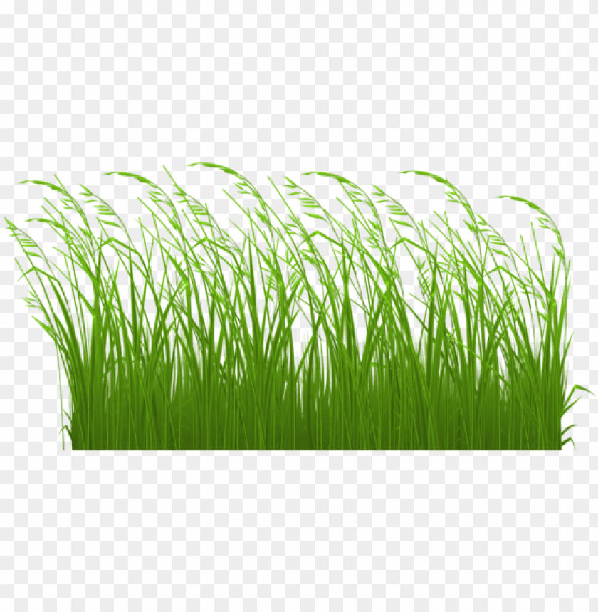 free PNG swamp vector grass clipart royalty free library - tall grass clipart PNG image with transparent background PNG images transparent