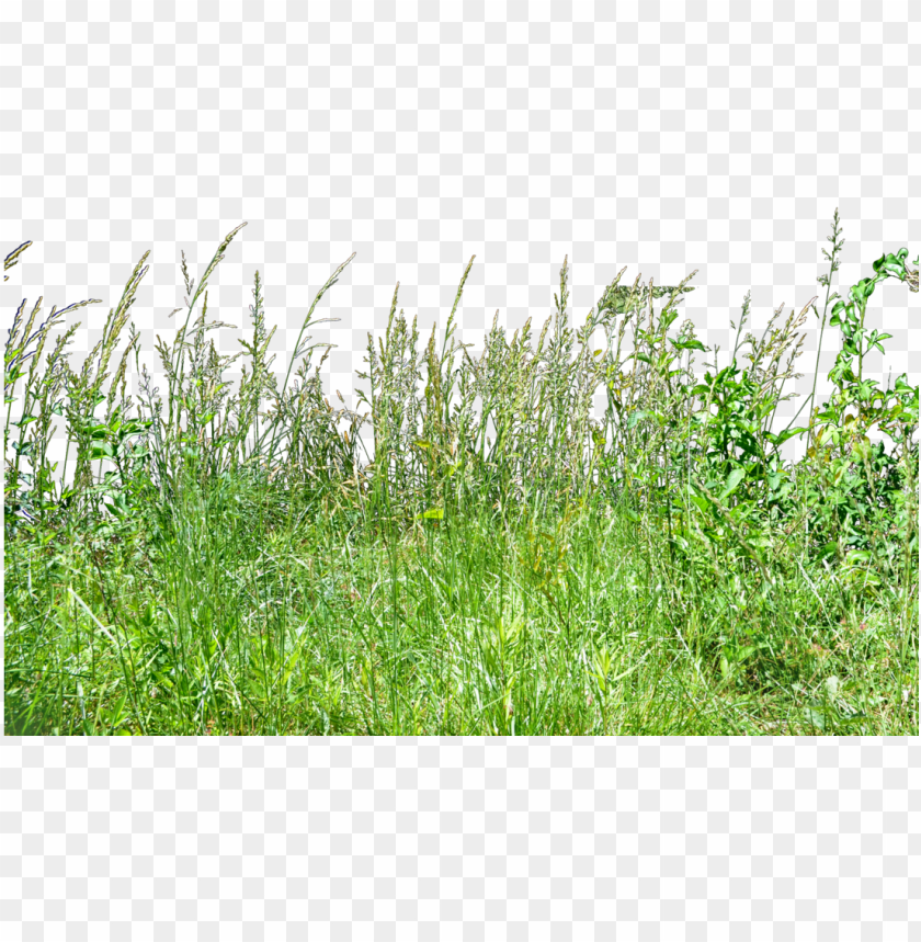 free PNG tall grass grass PNG image with transparent background PNG images transparent