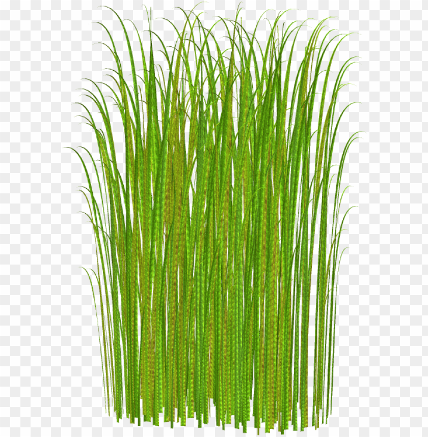 free PNG tall grass no background PNG image with transparent background PNG images transparent