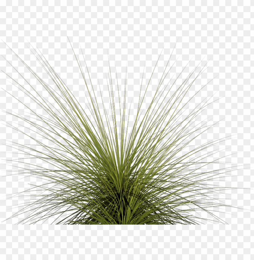 free PNG tall grass png - tall grass PNG image with transparent background PNG images transparent