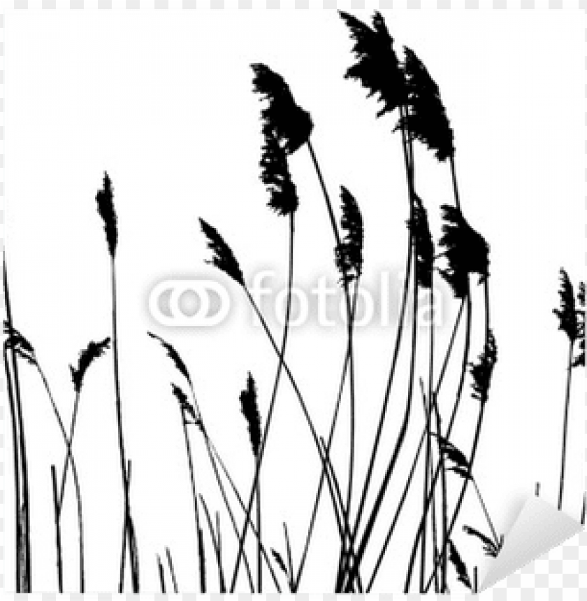free PNG tall grass silhouette PNG image with transparent background PNG images transparent