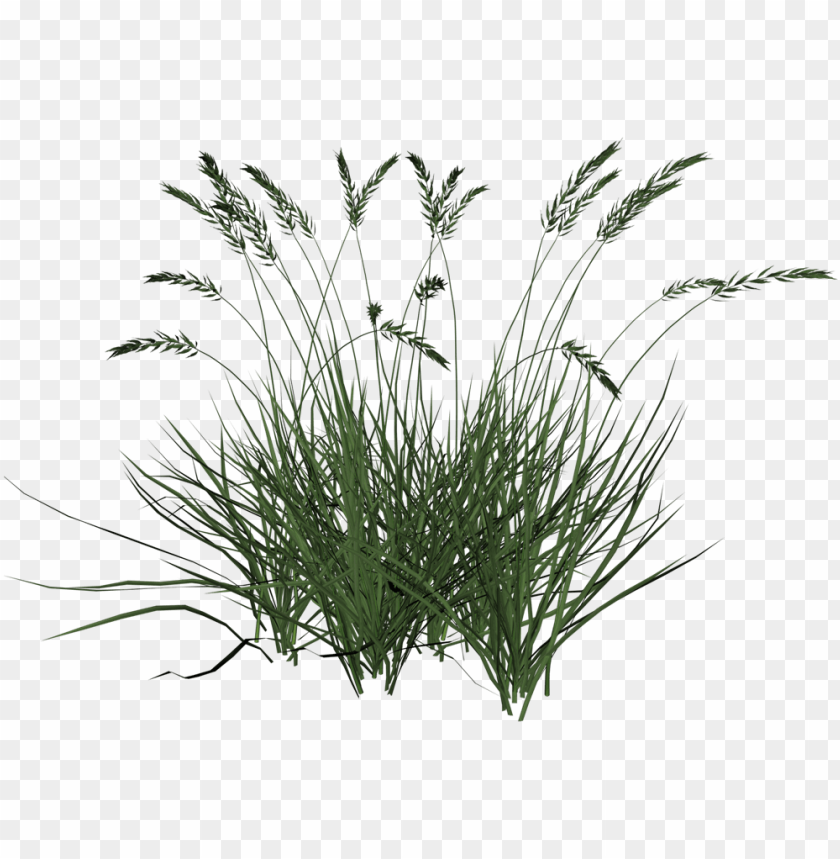 free PNG tall grass transparent background PNG image with transparent background PNG images transparent