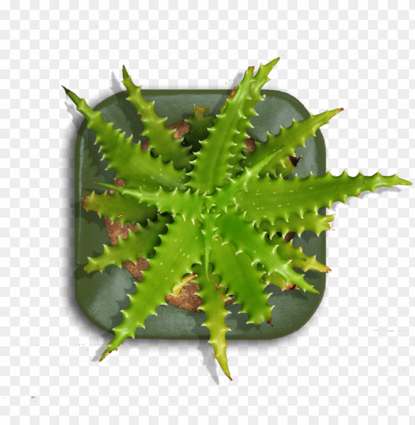 free PNG tall indoor plant png download - planter top view PNG image with transparent background PNG images transparent