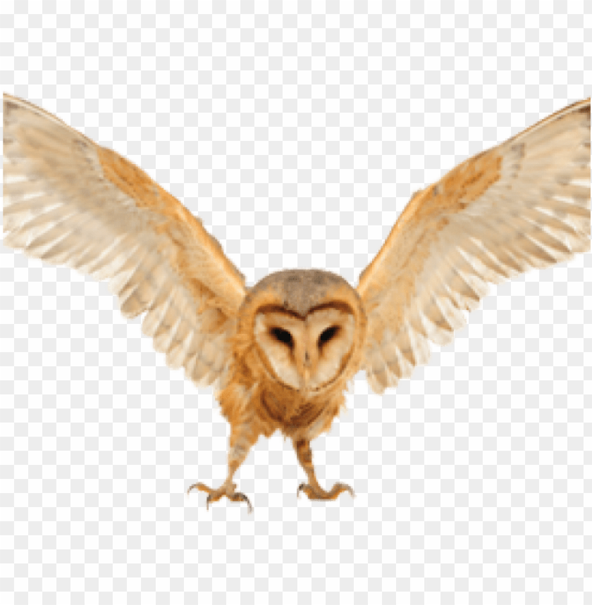 The Devon Bird Of Prey Centre Png Image With Transparent Background Toppng