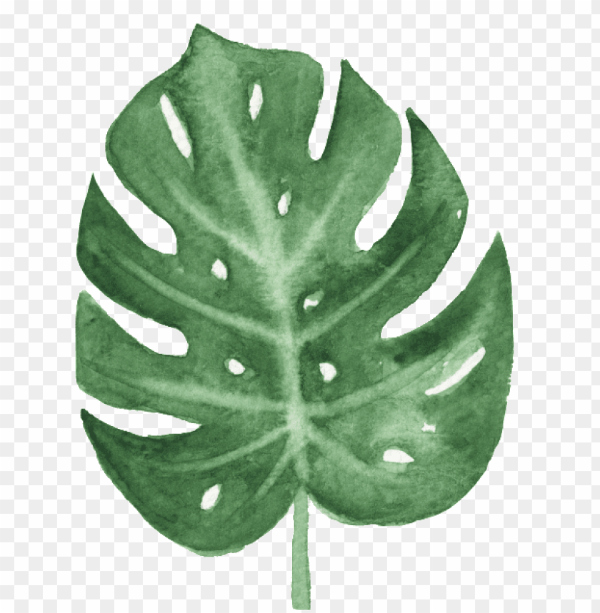free PNG the green banana leaf watercolor transparent buckle - watercolor leaves png transparent PNG image with transparent background PNG images transparent