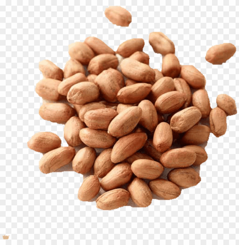 the groundnut belongs to the pea and bean family and - almond PNG image with transparent background@toppng.com