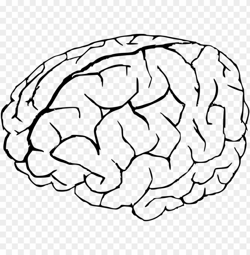 free PNG the human brain coloring book - brain coloring page PNG image with transparent background PNG images transparent