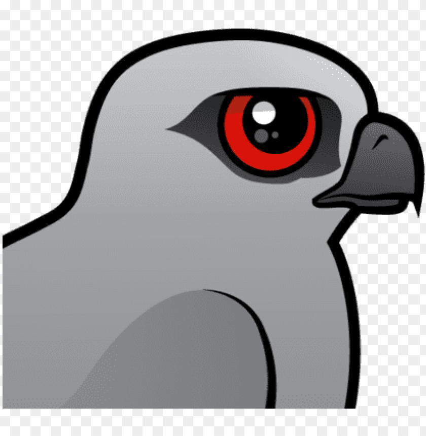 free PNG the mississippi kite is a medium sized bird of prey - mississippi kite PNG image with transparent background PNG images transparent